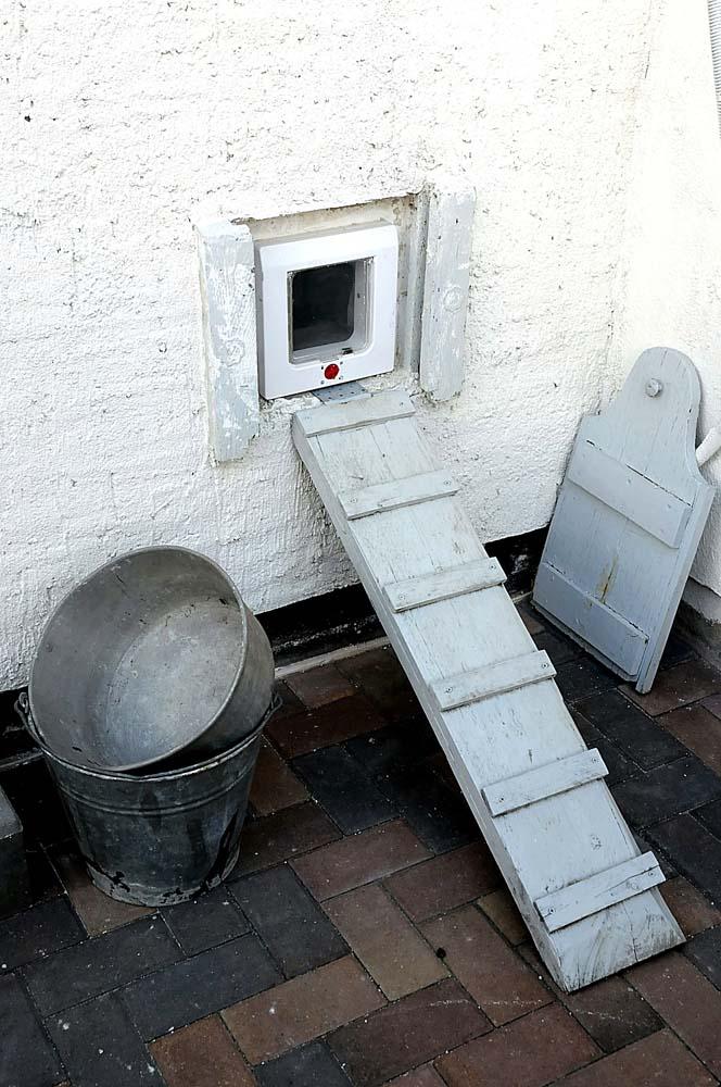 Birkenallee 35: Eine frühere Hühnertreppe dienet nun den Katzen aus Einstieg (Foto: hajo)